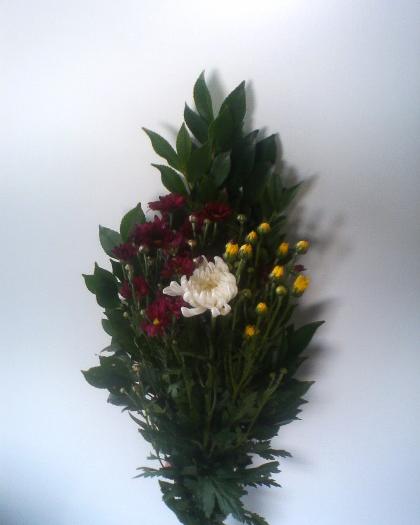 サカキ菊セット
