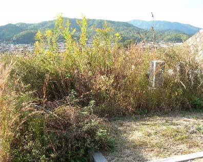 防草対策施工前